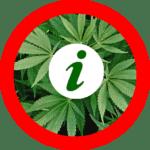 cannabis-info.fr